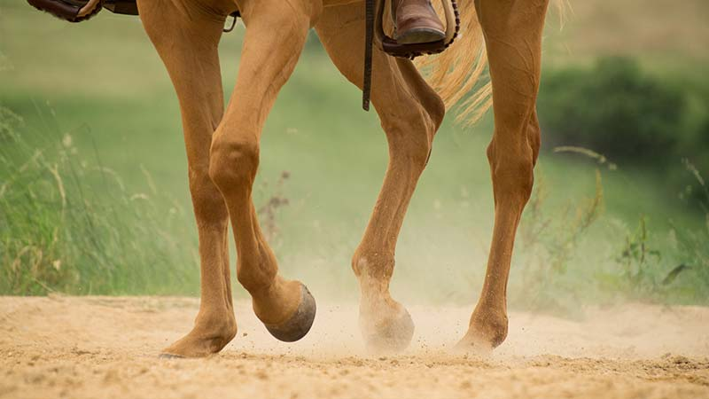 What are the Best Hoof Care Solutions?
